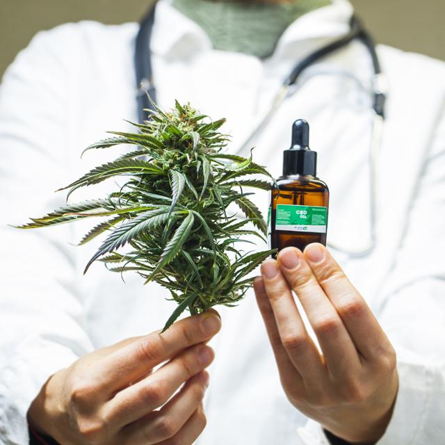 Le cannabis à usage médical